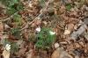 Fleur011