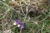 Fleur012