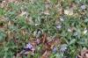 Fleur014