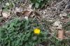 Fleur016