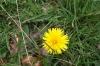 Fleur017