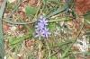 Fleur020